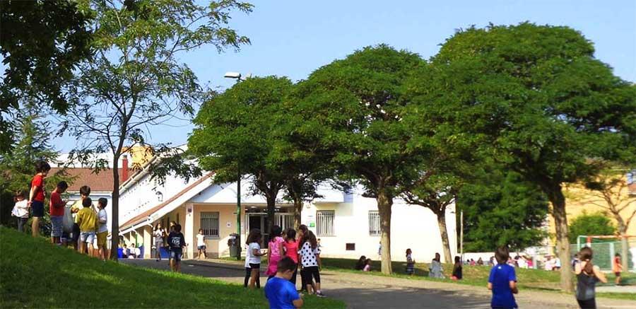 Árboles Del Colegio